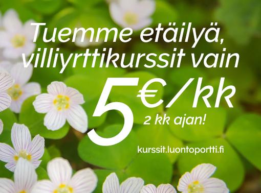 Villiyrttikurssit nyt vain 5 euroa kuukausi, kahden kuukauden ajan!