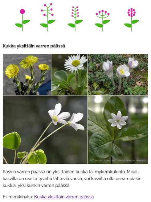 Kukkien sijaintivaihtoehtoihin tutustumista LuontoPortin verkkokurssilla