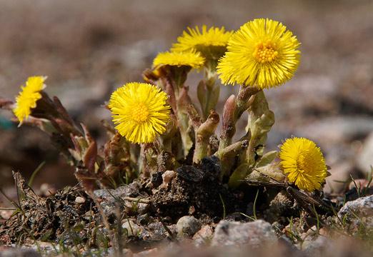 Kuvahaun tulos haulle kevät