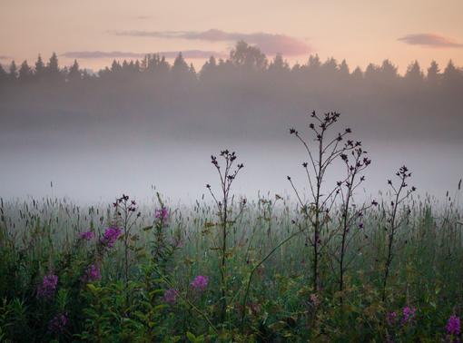 Kuva: Juha Lakaniemi