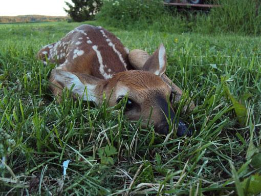 Aleksi Karvinen, bambi