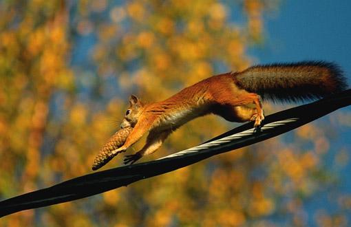 Matias Haaraniemi, Orava ruuanhakumatkalla