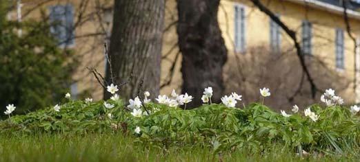Luontoportti Verkkolehti Kumpulan Kasvitieteellinen Puutarha